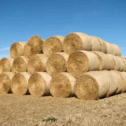 Some respite for drought-afflicted eastern Australia as Tasmanian farmers donate truckloads of feed.